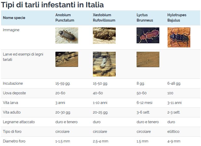 tipi-di-tarli-in-italia